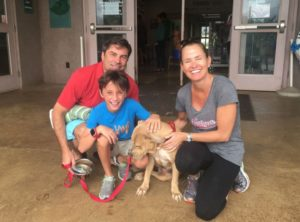 Vacationing Families Borrow Island Dogs for Day Trips