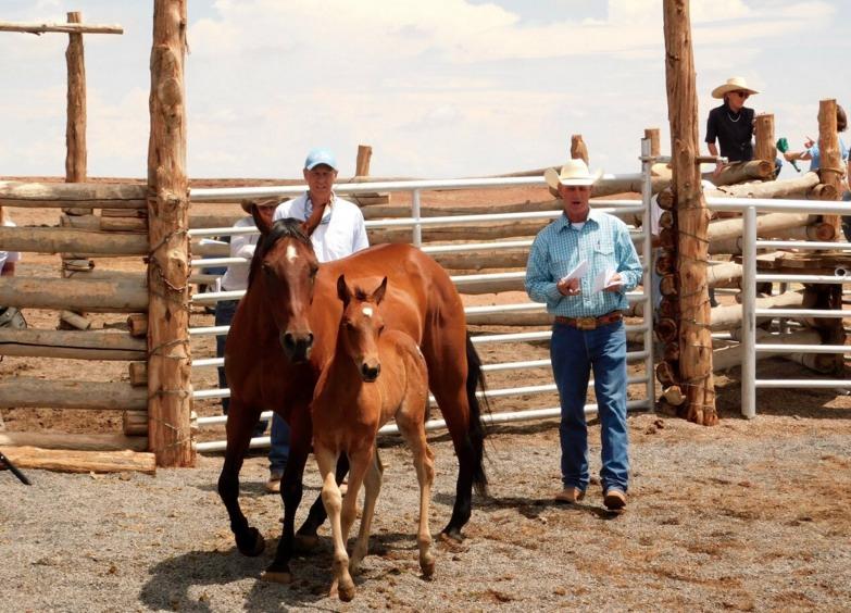 Cowboy Essence Wins At Babbitt Ranches Colt Sale