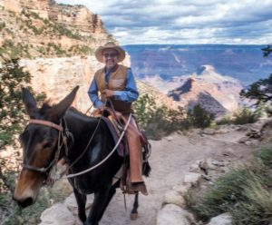 Grand Canyon Worker Keeps Mule Train Operations Running Smoothly