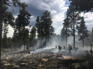 Reducing the Risk of Wildfire with Forest Restoration Efforts